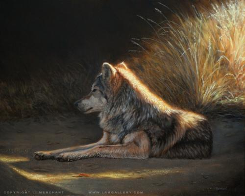 Last Light - Mexican Wolf