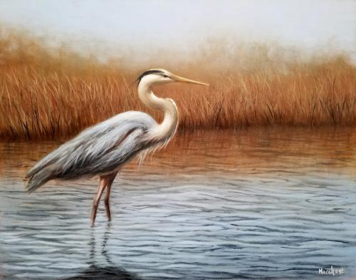 Blue Heron Wading